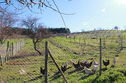 enoturismo_hens_eggs